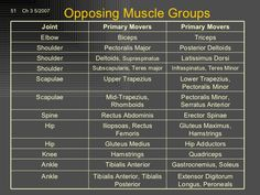 muscle groups diagram - Google Search
