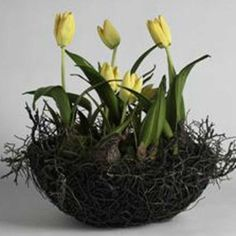 Yellow silk Tulips in a Twig Nest