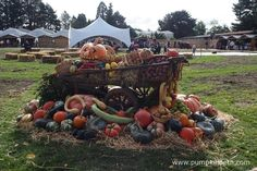 An autumnal themed display of vegetables grown at RHS Garden Wisley.