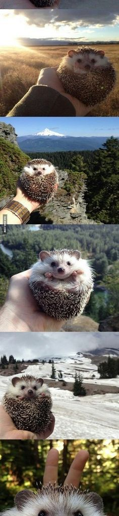 Hedgehog on vacation :3