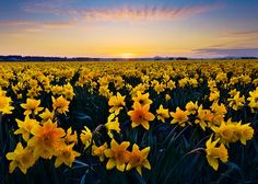 Ubiquitous Yellow by Trevor Anderson, via Flickr