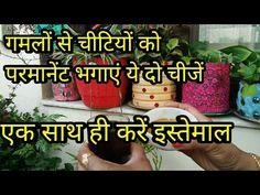 Easy Garden, Garden Art, Organic Gardening, Gardening Tips, Gutter Garden, Flower Pots, Diy Flower, Natural Pesticides, Home Health Remedies