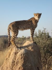 Splendid Namibia