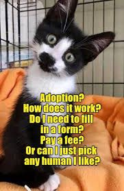 Up for adoption? - LOLcats is the best place to find and submit funny cat memes and other silly cat materials to share with the world. We find the funny cats that make you LOL so that you don't have to. Funny Cat Compilation, Funny Cat Videos, Funny Animal Pictures, Funny Animal Jokes, Cute Funny Animals, Funniest Animals, Animal Memes, Funny Cat Faces, Funny Cats