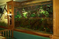 Créateur et fabrication d'aqua-terrarium sur mesure
