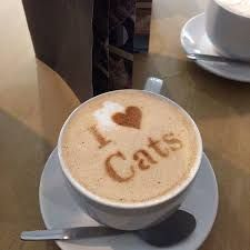 Image result for cat cafe Cat Cafe, Latte, Tableware, Image, Food, Coffee Milk, Dinnerware, Meal, Dishes
