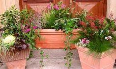Výsledek obrázku pro terasy květiny v nádobách Plants, Plant, Planets