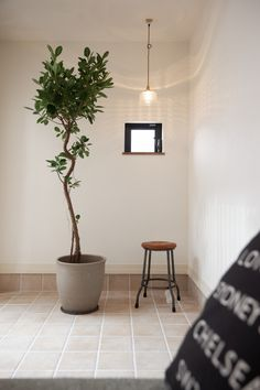 Image Map, Foliage Plants, Mudroom, House Plants, Entrance, Interior, Green, Home Decor, Houses