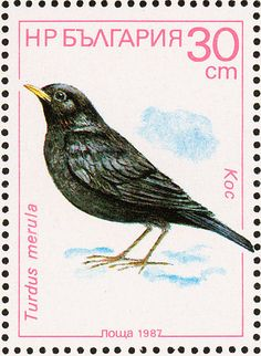Common Blackbird stamps - mainly images - gallery format