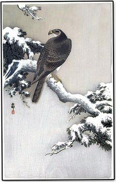 "aleyma: "" Ohara Koson, Goshawk on a Snow Covered Pine Branch, (source). Chinese Painting, Chinese Art, Korean Painting, Ohara Koson, Art Chinois, Japan Painting, Art Asiatique, Japanese Illustration, Art Japonais"