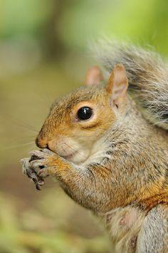 squirrel @Megan Ward Sangren