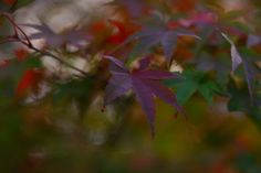 https://flic.kr/p/Aphhhw   Autumn colours   EyeEm www.eyeem.com/u/teruw0 Flickr original photos www.flickr.com/photos/teruw0teruw0/ Tumbl r www.tumblr.com/blog/teruw0