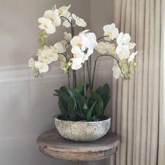 White Orchid Phalaenopsis Plants In Stone Look Bowl – Cowshed Interiors