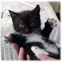 Black and white kitten named Ninja with a super cute kitten photo to boot. Find out how Britanys tuxedo kitty got his name after a long time of being