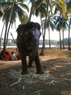 Happy elephant. India.