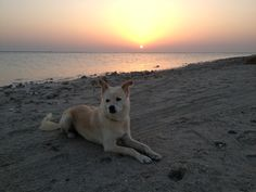 Sunrise - Amwaj Islands, Bahrain