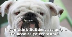 Bulldogs have my :)
