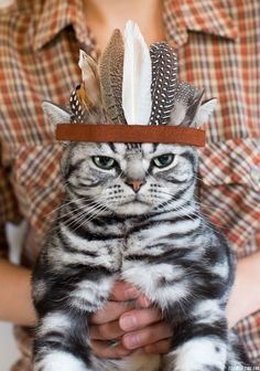 Cat w/feathered headdress by Fox in the Pine
