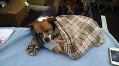 Oldest and longest resident at Ohio shelter: Let's find this dog a home