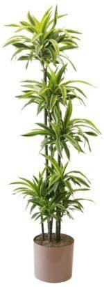 uc master gardener program complete guide to growing indoor plants includes light water
