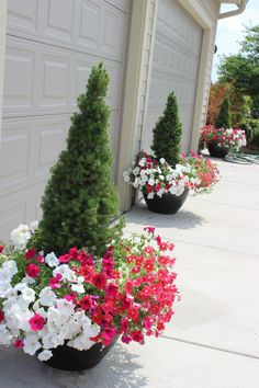 Love the mix with evergreen shrubs. 20great planters!!!