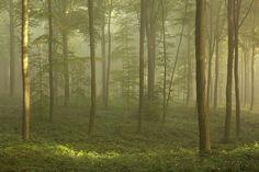 Mystical autumn forest - Brakel, Belgium by Bart Heirweg