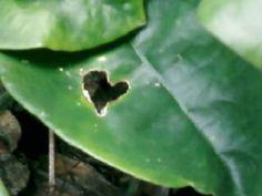 Elizabeth Vitale California Plant Leaves, Poetry, California, Reading, Plants, The California, Reading Books, Poetry Books, Planters