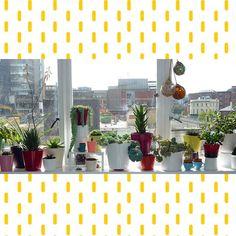 cari + carl studio garden
