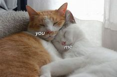 Image about love in ~Cats🐱 by 🌼°xLailax°🌼 on We Heart It Animals And Pets, Funny Animals, Cute Animals, I Love Cats, Cute Cats, Cute Love Memes, Wholesome Memes, Infp, Cats And Kittens