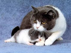 Kitty with a cat - 23 Photo (18)