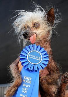 Chinese Crested Dog-Mugly