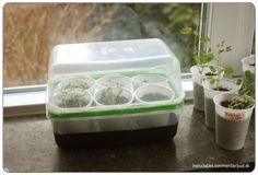 When sprouting seeds or rooting clones it's a good idea keep them in a place with warm and humid air(~20-25°C / 68-77 °F).This is where a humidity dome comes in. Putting the seeds or clones in a Jiffy pot or a Rockwool cube and then filling botto