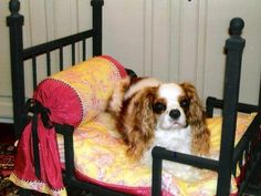 Pet decor - While Mary's son created the metal frame, she stitched up the stylish bedding. To achieve a high-end look, Mary recommends that you choose two complementary, washable fabrics that really pop when you put them together.