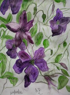 Sketchbook painting of my clematis #flowers #painting #thedailysketch