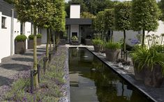 contemporary garden rill water feature in deep shades of grey and black with lavender planting and tall contemporary pots - Fotos van diverse aangelegde tuinen - Martin Veltkamp Tuinen