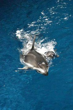 New baby dolphin