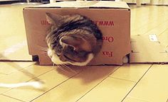 Maru #2. | The Best Cat GIF Post In The History Of Cat GIFs