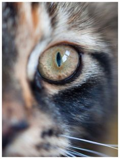 De blik.......   Dieren foto van Mauriliers   Zoom.nl