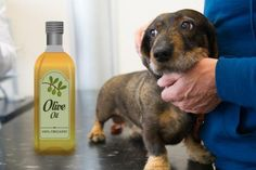 Many dogs develop dry skin from time to time. While it's important to find out what's causing the dryness, a little olive oil can help ease the discomfort . Olive Oil For Dogs, Dry Skin On Feet, Dry Skin On Dogs, Dry Skin Causes, Dry Skin Remedies, Oils For Dogs, Cream For Dry Skin, Skin Care Tips, Make Up
