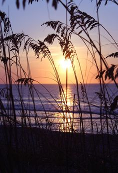 Kure Beach, North Carolina at dawn - Holiday Resort Kure Beach North Carolina, North Carolina Beaches, North Carolina Mountains, Sunset Beach Nc, Kure Beach Nc, Beach Sunsets, Photography North Carolina, Wrightsville Beach, Through The Looking Glass