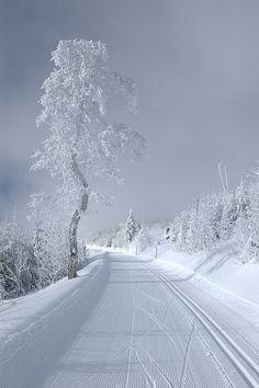 Winter..... dedicado a mis amigos del cono sur