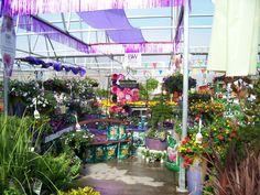 Proven Winners at Calloway's Nursery in North Arlington North Arlington, Proven Winners, This Is Us, Nursery, Garden, Flowers, Plants, Garten, Baby Room