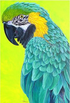 Blue & Gold on Green by Tim Marsh Tropical Art, Tropical Birds, Exotic Birds, Blue Gold Macaw, Canson, African Grey Parrot, Color Pencil Art, Bird Drawings, Green Print
