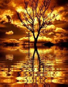 ❖ Yellow & Orange Clouds with Tree Reflections