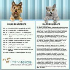 La vida de un perro y la de un gato