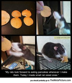 Tiny Rat-Sized Pancakes