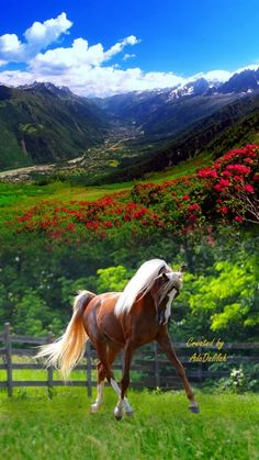A 70 pieces jigsaw puzzle from Jigidi Horse Photos, Horse Pictures, Animal Pictures, Nature Animals, Animals And Pets, Cute Animals, Most Beautiful Horses, All The Pretty Horses, Cute Horses