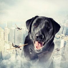 Cachorros manipulados