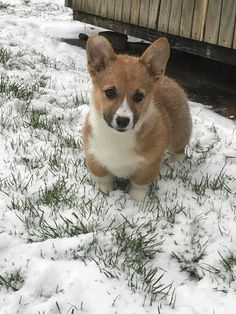 Our new baby in her first snow!https://ift.tt/2pYW4CB