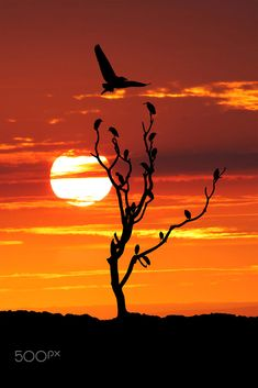 The Resting Time by Muhammad Buchari / 500px Silhouette Painting, Bird Silhouette, Amazing Sunsets, Beautiful Sunset, Peacock Wall Art, Nature Sauvage, Sunset Photography, Blue Abstract, Nature Wallpaper